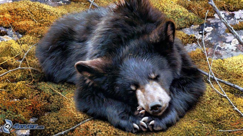 ours noir, dormir