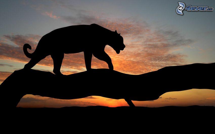 panthère, silhouette, tronc, coucher du soleil
