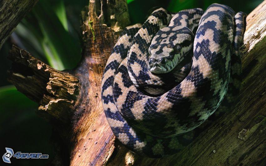 serpent, tronc