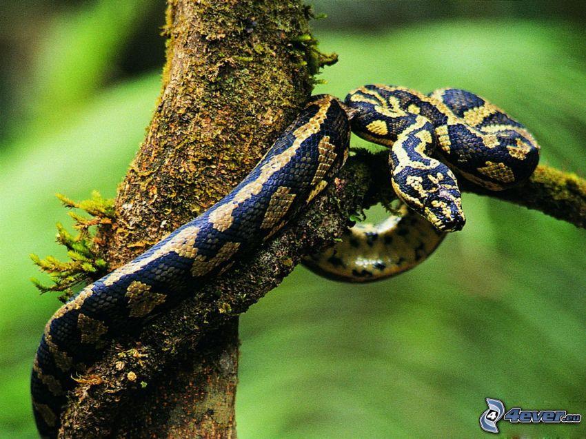 serpent sur l'arbre