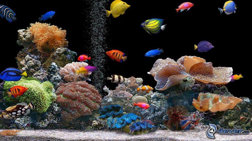 poissons de corail, poissons colorés, coraux, aquarium
