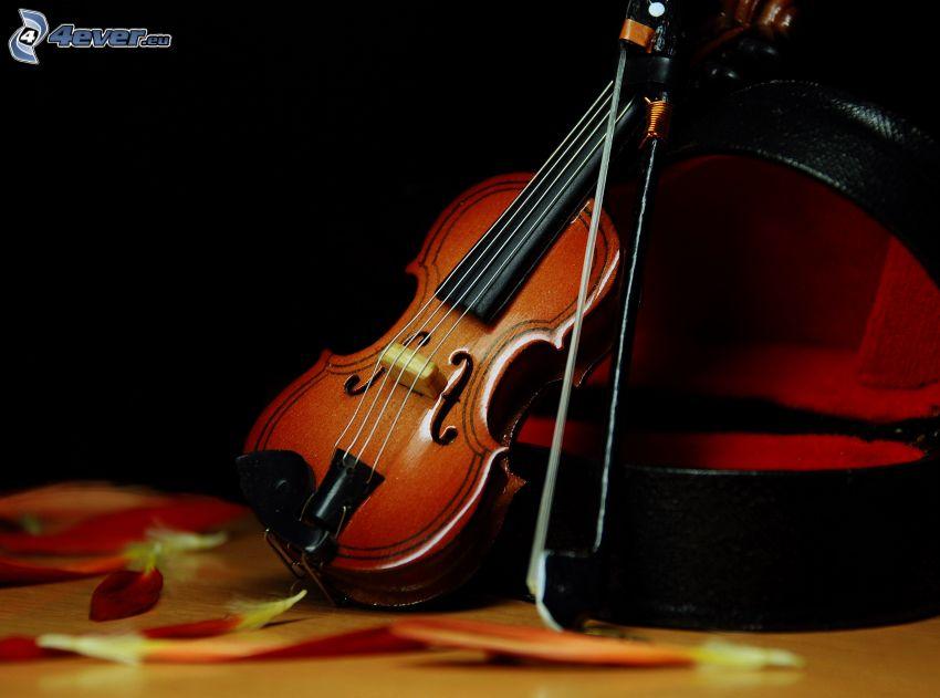 violon, pétales de roses