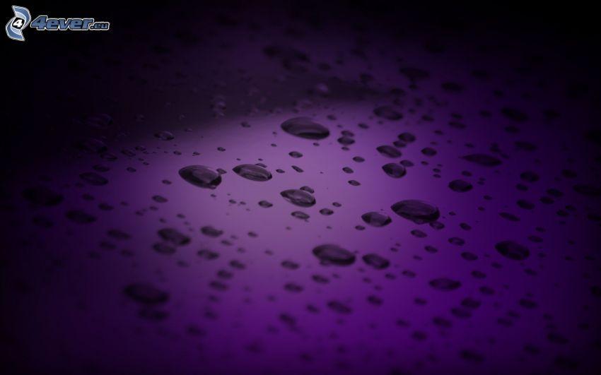 gouttes d'eau, le fond violet