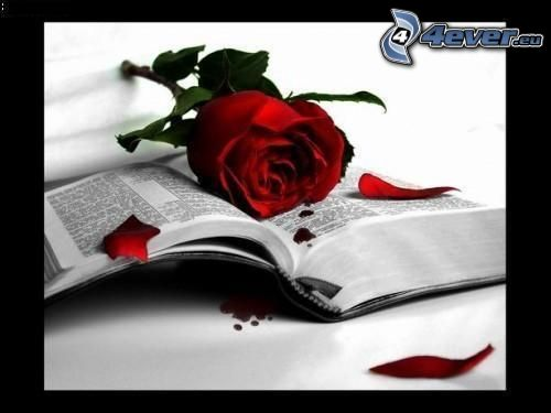 rose, livre