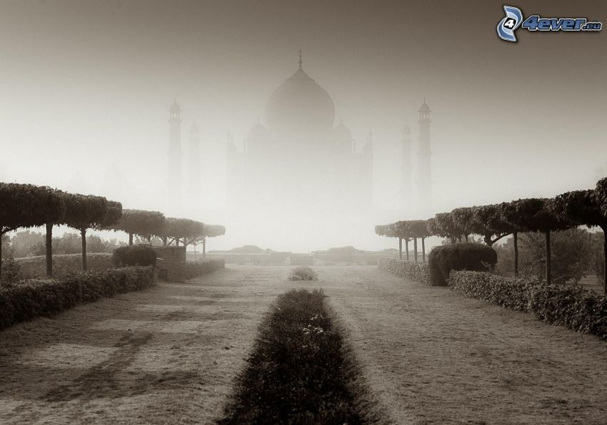 Taj Mahal, Inde, palais, brouillard, allée, noir et blanc