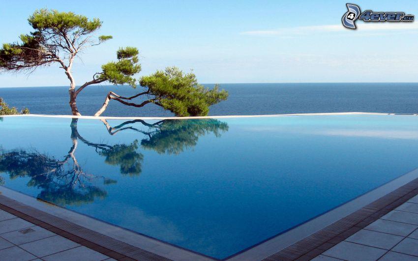 piscine, mer, arbre