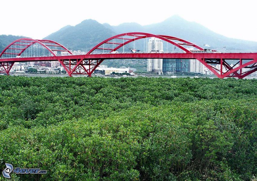 Guandu Bridge, forêt