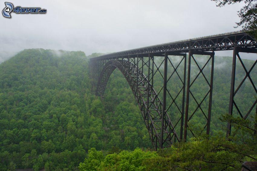 New River Gorge Bridge, forêt, brouillard