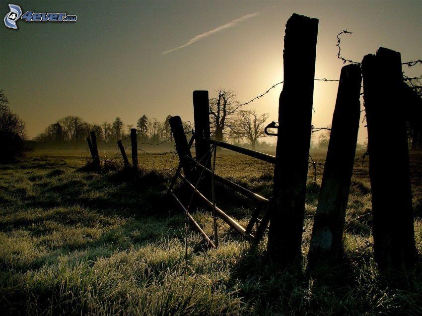 vieille clôture, grillage, coucher du soleil dans une prairie, arbres