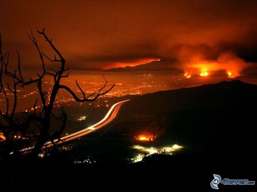 feu, Los Angeles, l'autoroute de nuit, arbre sec dans, silhouette de l'arbre