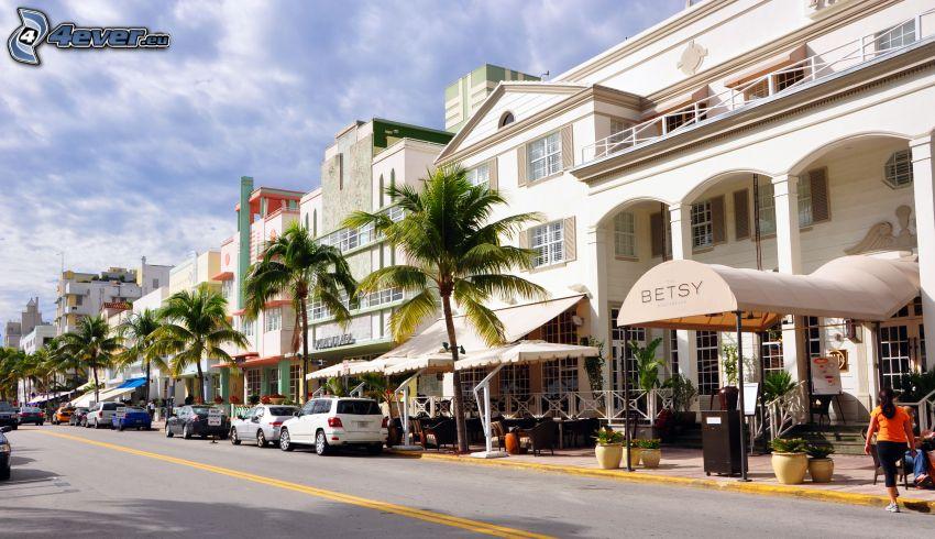 Miami, rue, palmiers, maisons
