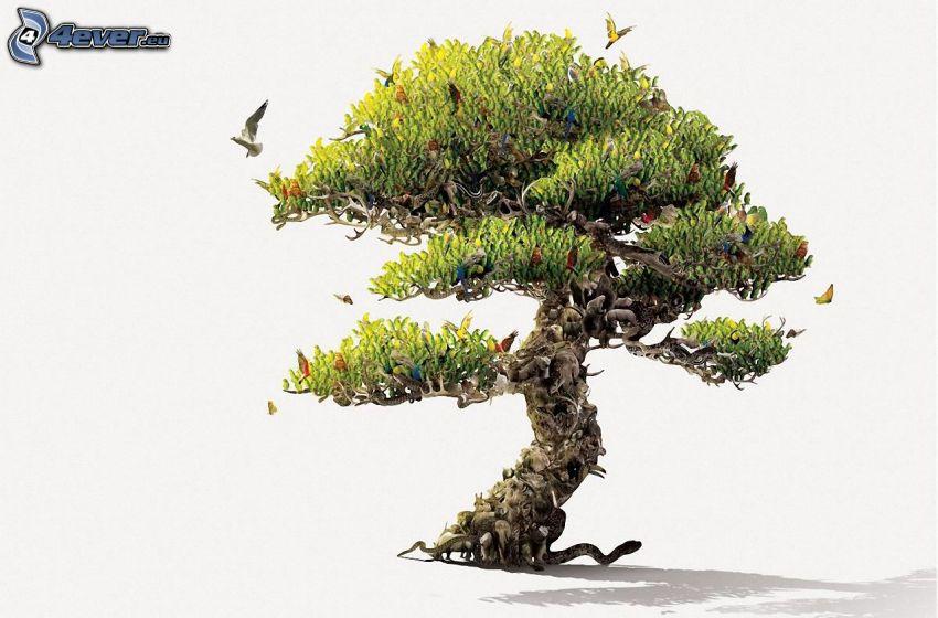 bonsaï, animaux, oiseaux