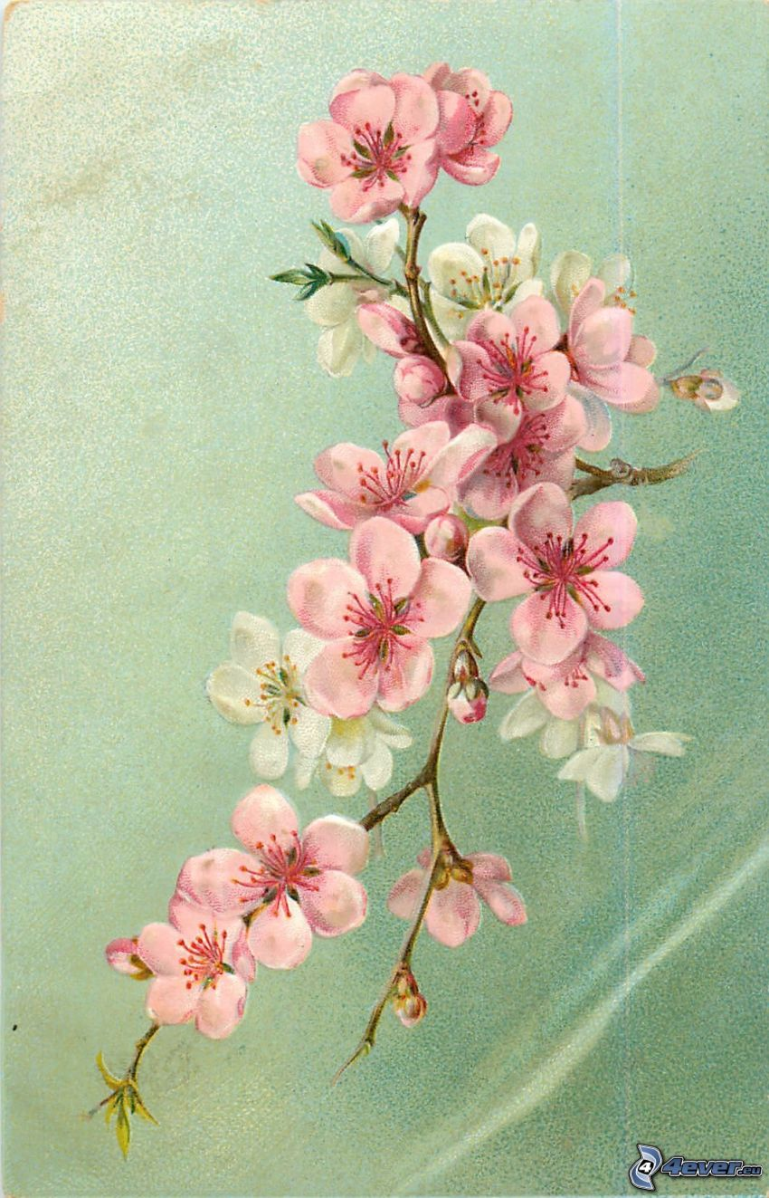 brindille en fleur, fleurs roses