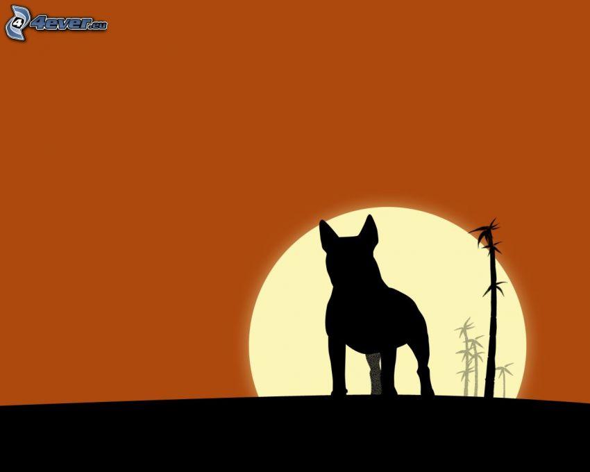 bull terrier, silhouette, coucher du soleil, palmiers