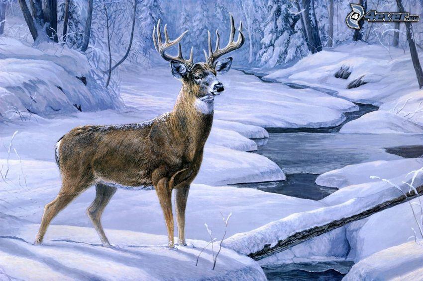 cerf, rivière d´hiver, paysage enneigé