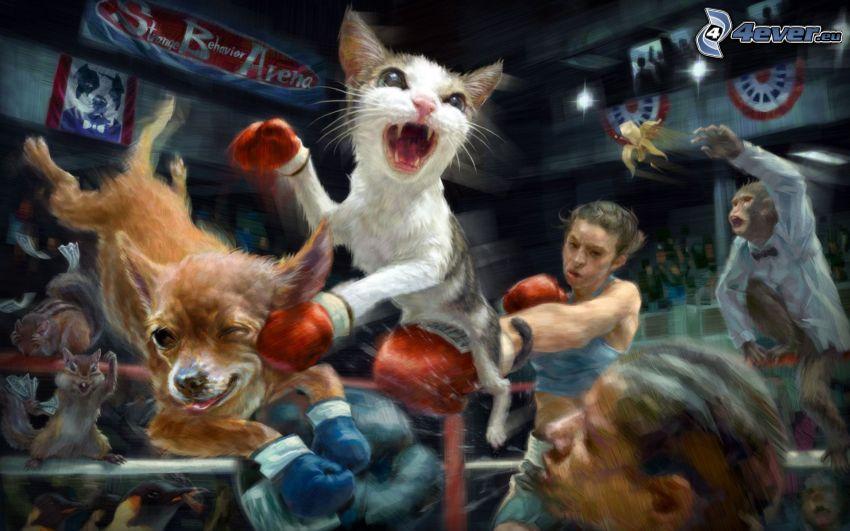 chat, chien, box, boxeurs