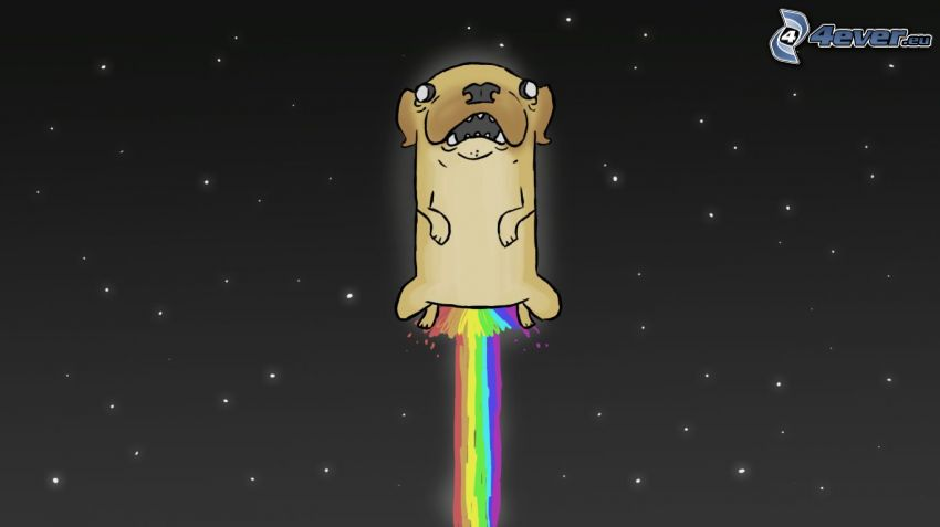 chien dessiné, ciel étoilé