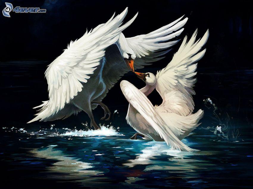 cygnes, amour