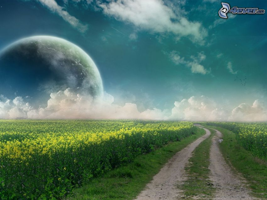 chemin de campagne, colza, lune, nuages