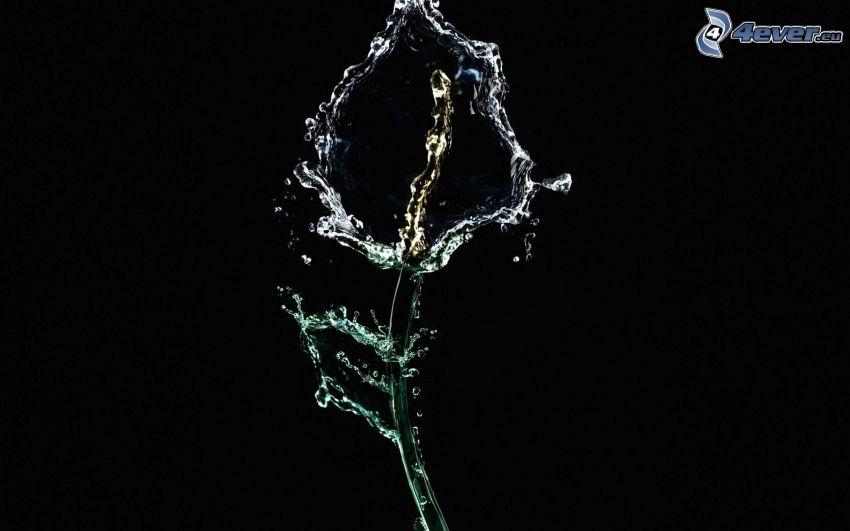 fleur, eau
