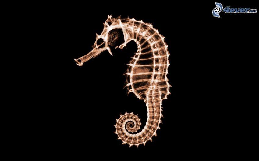 hippocampe, squelette