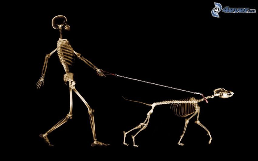 squelettes, chien