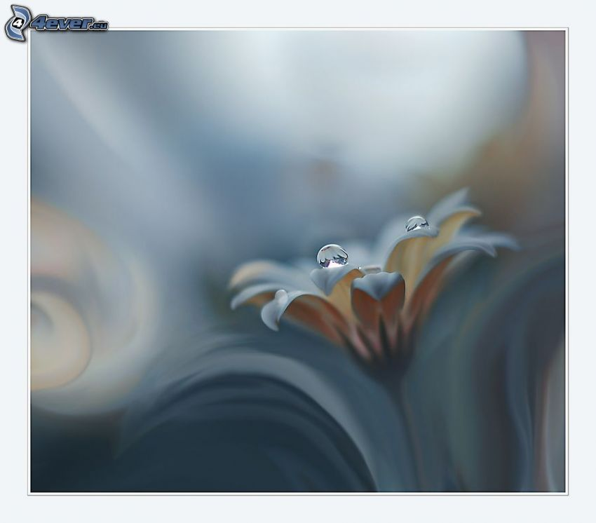 fleur, gouttes d'eau