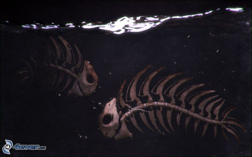 poissons, squelettes