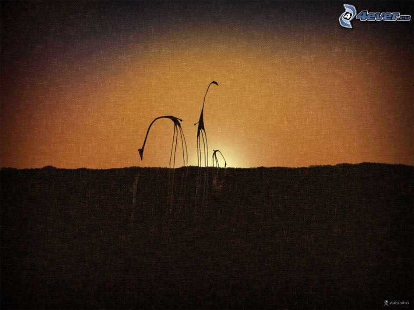 silhouettes de girafes, coucher du soleil