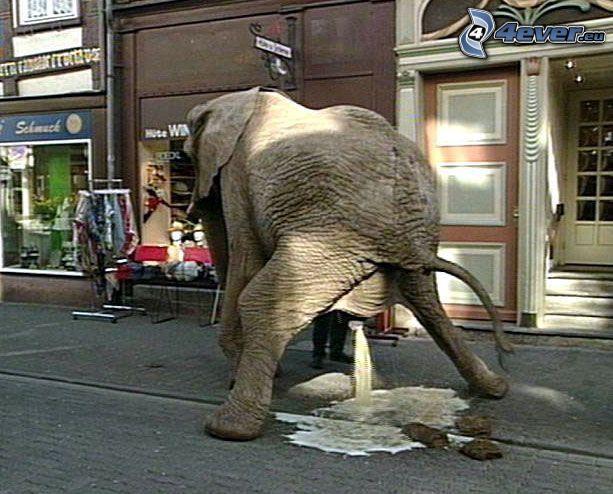 éléphant, toilette, rue