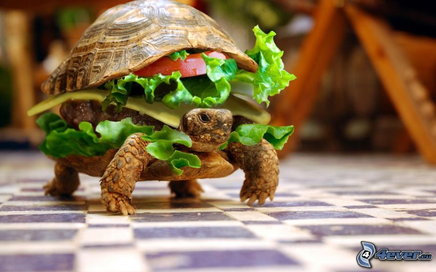 tortue, hamburger