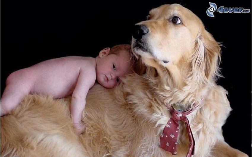 chien et l'enfant, amour, cravate