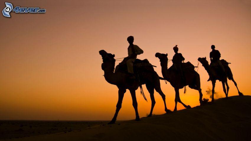 bédouins sur des chameaux, après le coucher du soleil