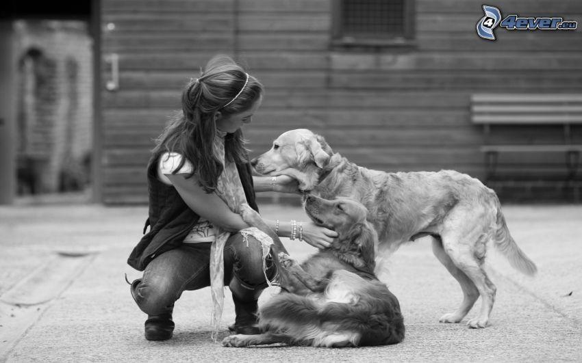 femme, chiens