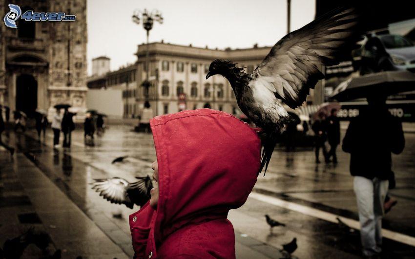 femme, pigeons, oiseau, rue