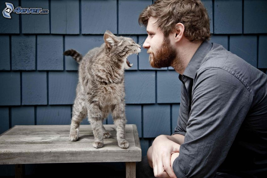 homme, chat