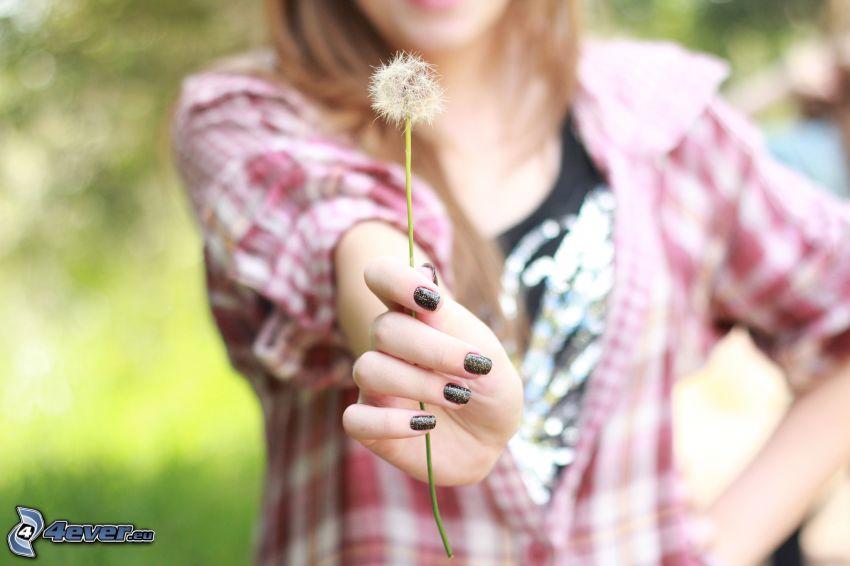 pissenlit défleuri, fille, ongles peints, chemise