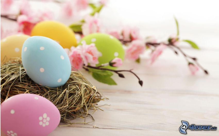 des oeufs peints, oeufs de Pâques, brindille en fleur