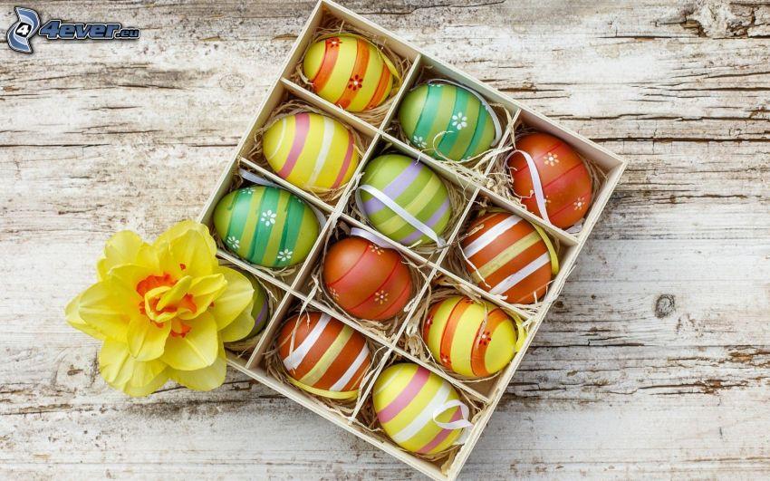 des oeufs peints, oeufs de Pâques, narcisse, caisse