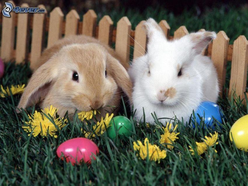lapins de pâques, œufs, fleurs