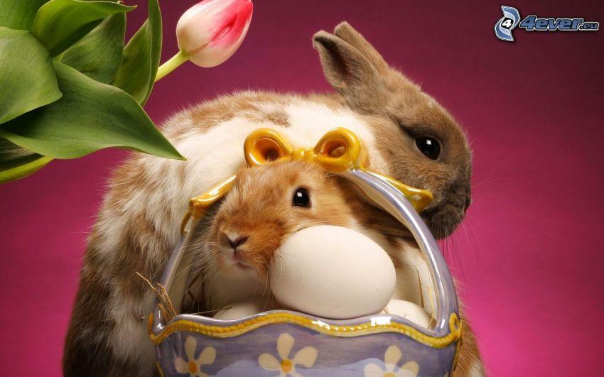 lapins de pâques, tulipe, œufs