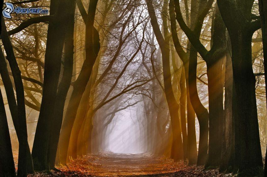allée des arbres, route, rayons du soleil