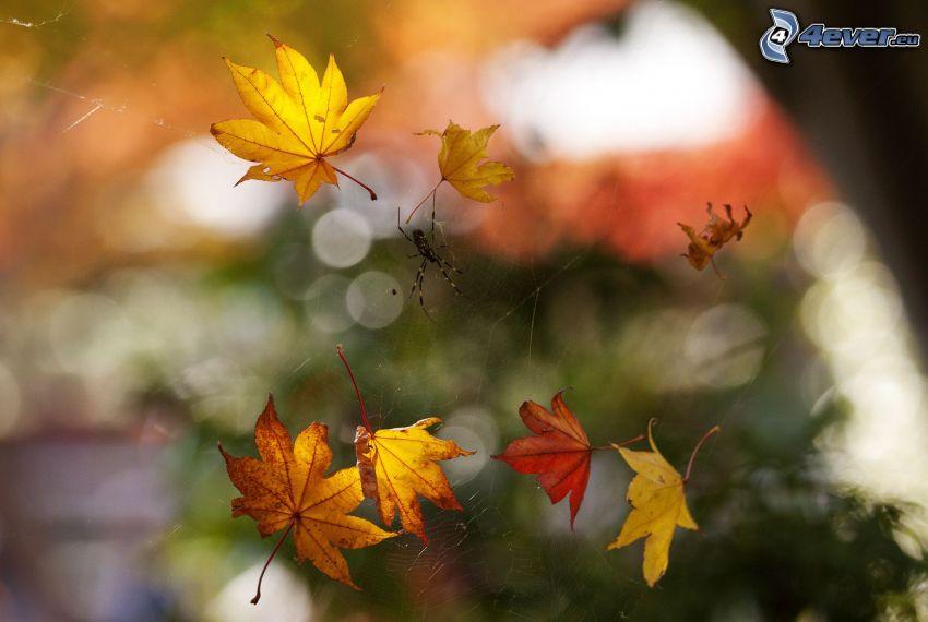 araignée, les feuilles d'automne