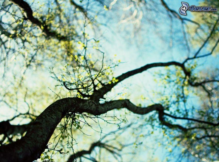 arbre, branche
