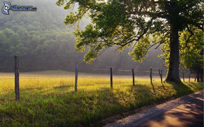 arbre, clôture, forêt