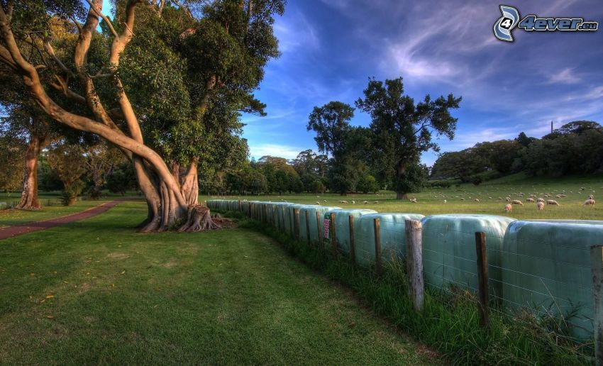 arbre, clôture, moutons