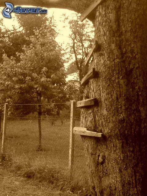 arbre, échelle, affűt, grillage