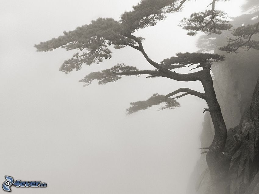 arbre, rochers, brouillard