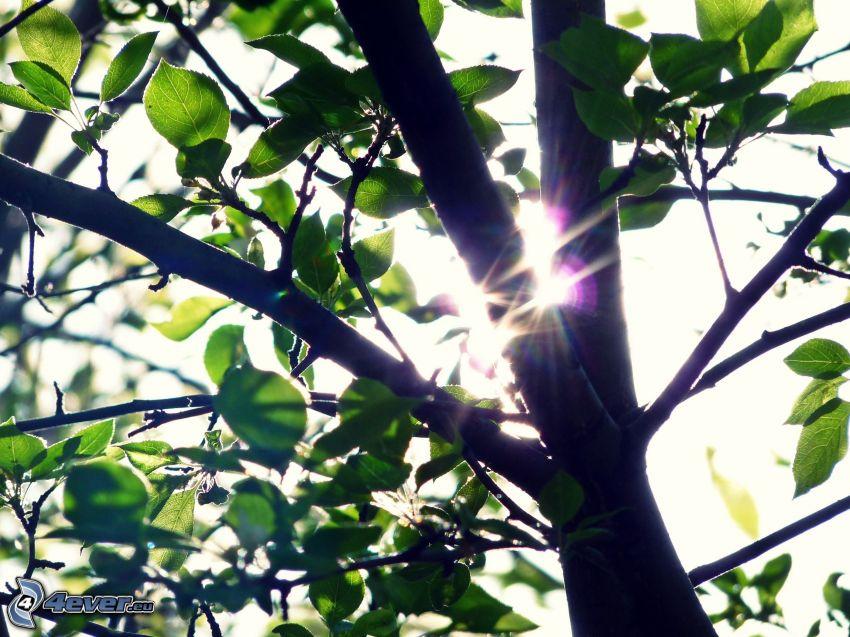 arbre, soleil
