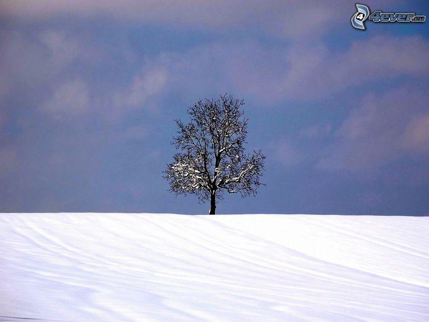 arbre enneigé, arbre solitaire, neige